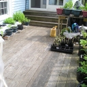 I have to grow my vegetables on my deck now. There are more not in the picture.<br />The herbs are on the table.